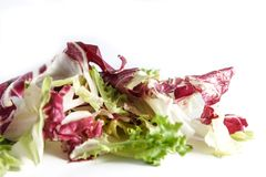 Salad radicchio and green lettuce  on white background, selective focus and and controlled blur . Royalty Free Stock Photography