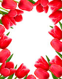 Red fresh spring flowers background Stock Photo