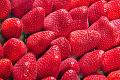 Red, fresh strawberries Royalty Free Stock Photo