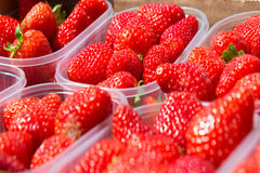 Red fresh strawberry Stock Photography