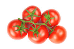 Red and fresh tomatoes. Branch with red and fresh tomatoes isolated on white Royalty Free Stock Photos