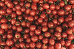 Red fresh tomatoes background. Natural local products on the farm market. Harvesting. Seasonal products. Food Stock Images