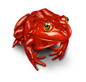 Red Frog. As a symbol of the environment and a rebel that protects nature from pollution and environmental disasters from human toxic waste on a white Royalty Free Stock Photos