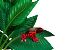 A red frog Royalty Free Stock Photo