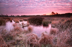 Red frosty sunrise over swamp Royalty Free Stock Images