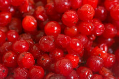 Red frozen berry Royalty Free Stock Photo