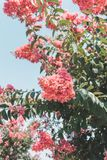 Red fruit blossom on a tree on a sunny day stock photos