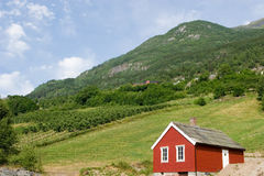 Red Fruit Farm. Fruit farm in Hardanger Norway with a red storage shed in the front Stock Photography