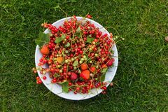 Red fruit. Fresh red fruit in a plate on a lawn stock photos
