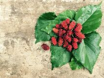 Red Fruit and Green Leaf Royalty Free Stock Photography