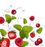 Red fruit and splash of water Royalty Free Stock Photos