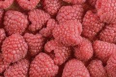 Red-fruited raspberries. Raspberries background. Close-up. Macro image Royalty Free Stock Images