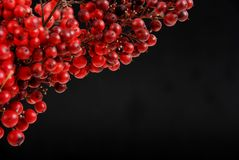 Red fruits Stock Images