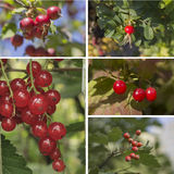 Red fruits and berries. Collage of red autumn fruit stock image