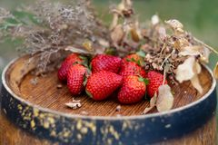 Red fruits or berries and dry grass on a wooden surface in the garden royalty free stock photography