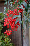 Red fruits for decorations at the house Royalty Free Stock Photo