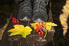 Red fruits and yellow autumn leaves Royalty Free Stock Photography