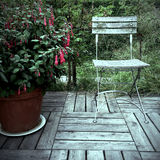 Red fuchsia and old wooden chair Stock Photography