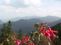 View into the mountains with blurred red flowers in the foreground. Red fuchsias as a blurred foreground, majestic mountains with flowers in the foreground stock images