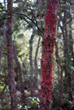Red Fungus Forest Stock Photography