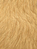 Red fur. Close up of red fur coat Royalty Free Stock Photos