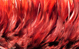 red fur from feather Royalty Free Stock Photos