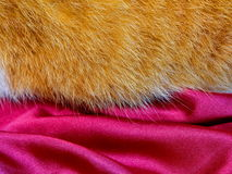 Red fur on the red silk Stock Photo