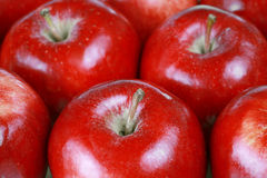 Red gala apples Royalty Free Stock Photography