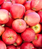 Red Gala apples on display Royalty Free Stock Images