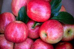Red Gala apples Stock Image