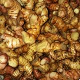 Red galangal, still a family with ginger and turmeric stock photo