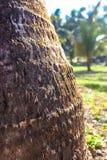 Red garden ants run over tree Stock Photo