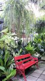 Red garden bench in fern green house in hot summer day Stock Photography