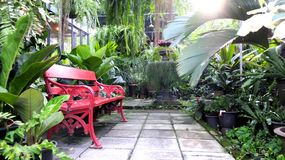 Red garden bench in fern green house in warm summer day Stock Image