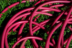 Red Garden Hose Royalty Free Stock Image