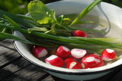 Red garden radish and onion. Washing red garden radish and onion in a white bowl Royalty Free Stock Photography