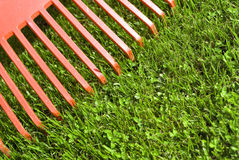 Red garden rake Stock Image