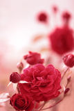 Red garden rose. Against soft pink background Stock Photography
