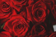 Red garden roses clouse up. Rose bouquet closeup with rain drops Royalty Free Stock Images