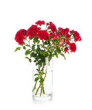 Red garden roses in a vase  on white Stock Images