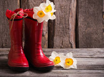 red garden shoes with spring flowers Royalty Free Stock Image