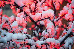Red garland with snow Royalty Free Stock Photo