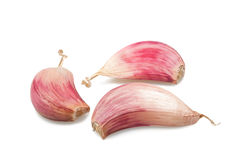 Red garlic Royalty Free Stock Photos