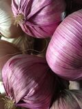 Red garlic. Hanging red and white whole raw garlic Royalty Free Stock Photography