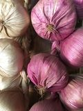 Red garlic. Hanging red and white whole raw garlic Stock Images
