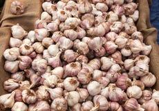 Red garlic Royalty Free Stock Photo