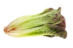 Red gem lettuce Royalty Free Stock Images