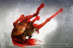 Red, Geological Phenomenon, Computer Wallpaper, Organism