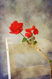 Red geranium. On old vintage white chair in romantic texture Royalty Free Stock Photos