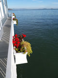 Red geranium in boxes overlooking sea background. Narrow passage with white rails and flower boxes. Red geranium flowers and the San Francisco Bay as background Royalty Free Stock Image